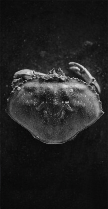 貝類・甲殻類